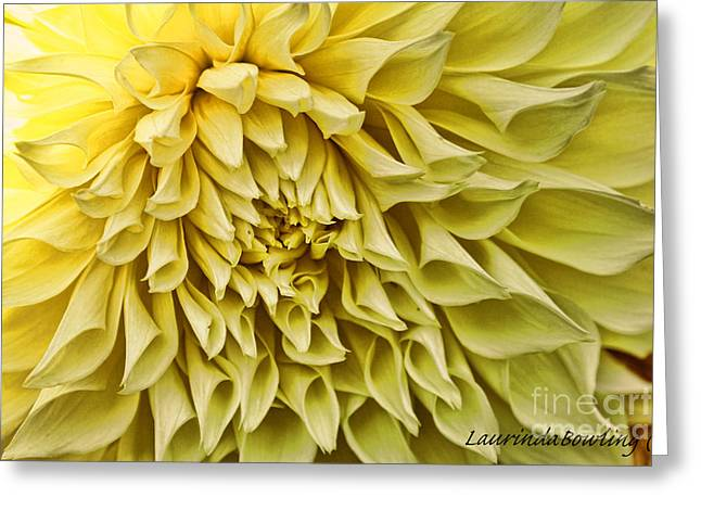 Yellow Dahlia Greeting Card by Laurinda Bowling