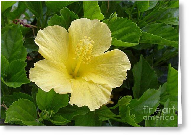 Yellow Dahlia Greeting Card by Paul Clinkunbroomer