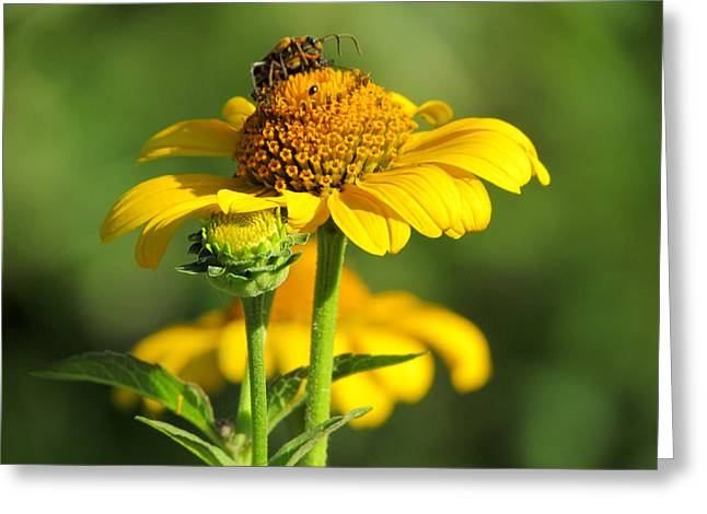 Yellow Daisy Greeting Card by David T Wilkinson