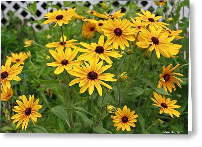Yellow Daisy Flowers #2 Greeting Card