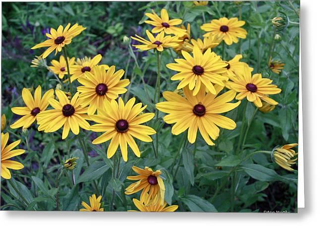 Yellow Daisy Flowers #3 Greeting Card