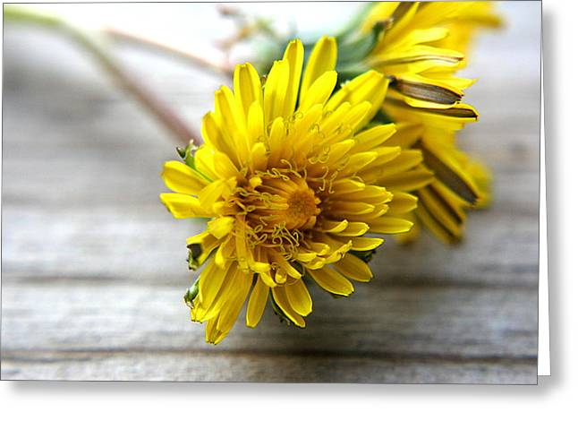 Yellow Dandelions Greeting Card by Ester  Rogers