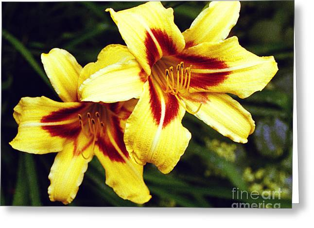 Greeting Card featuring the photograph Yellow Daylilies  by Tom Brickhouse