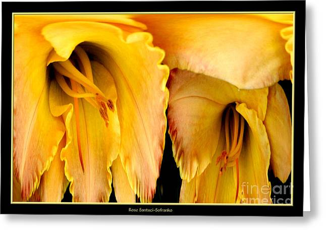 Yellow Daylily Abstract Greeting Card by Rose Santuci-Sofranko