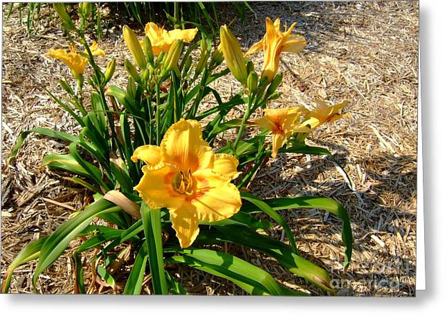 Greeting Card featuring the photograph Yellow Daylily by Deborah DeLaBarre