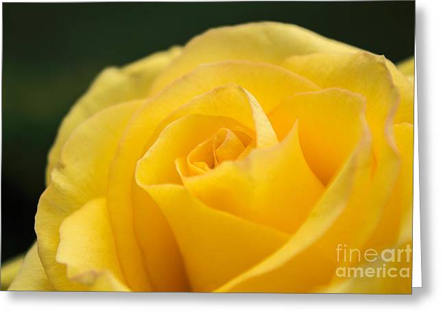 Yellow Delight Greeting Card by Arlene Carmel