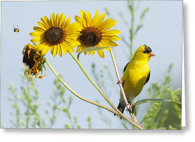 Yellow Delight Greeting Card by David Lester
