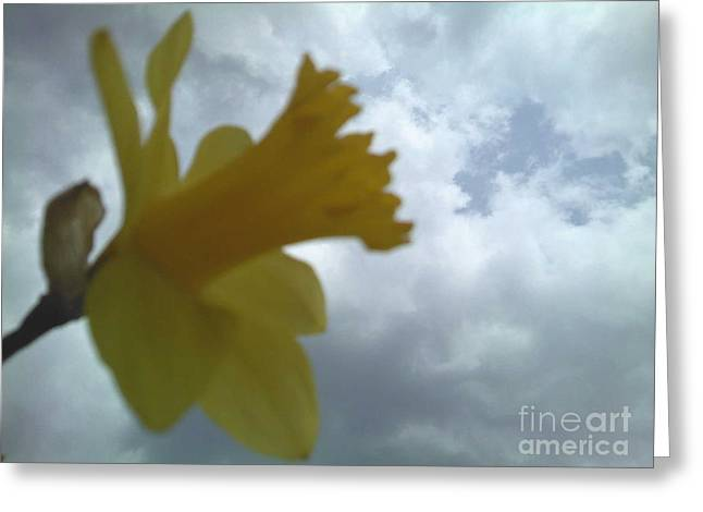 Yellow Delight Greeting Card by Thommy McCorkle