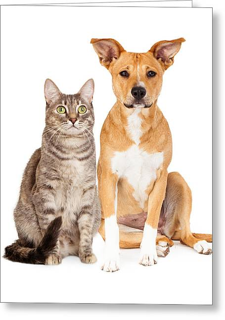 Yellow Dog And Tabby Cat Greeting Card by Susan Schmitz