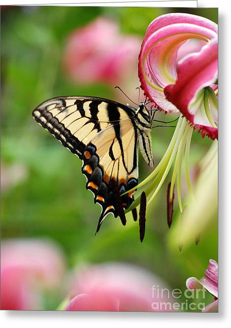 Yellow Eastern Swallowtail Butterfly Greeting Card