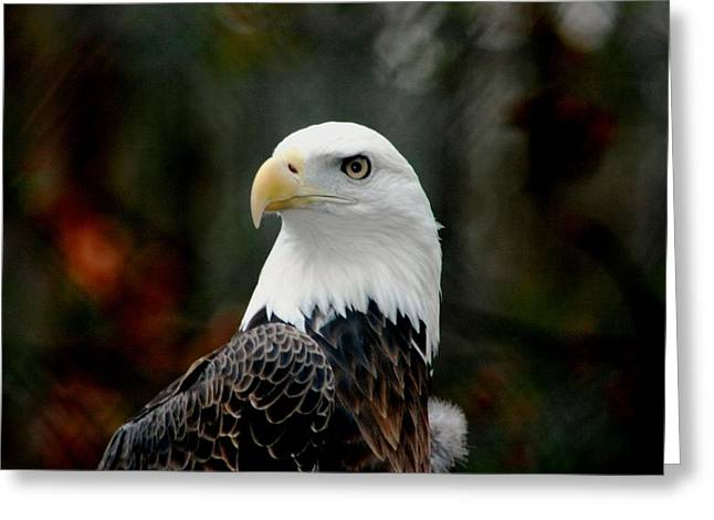 Greeting Card featuring the photograph Yellow Eye by Steve Godleski