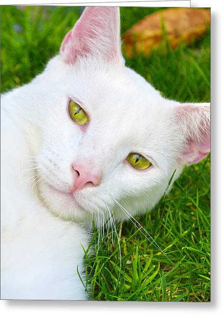 Yellow Eyes Greeting Card