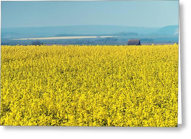 Yellow Field Greeting Card by Svetlana Sewell