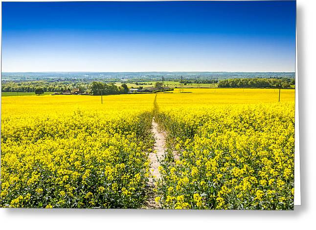 Yellow Fields. Greeting Card