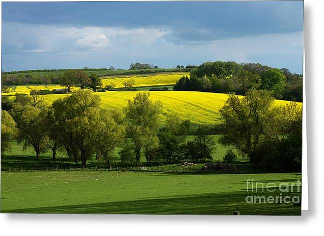 Yellow Fields In The Sun Greeting Card