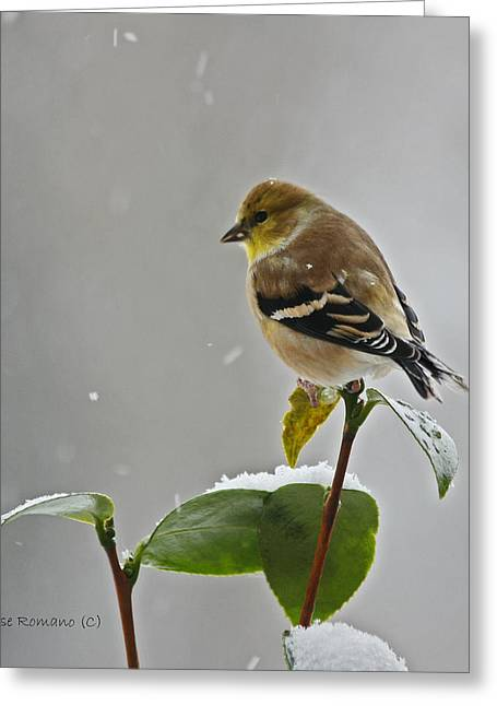Yellow Finch Greeting Card by Denise Romano