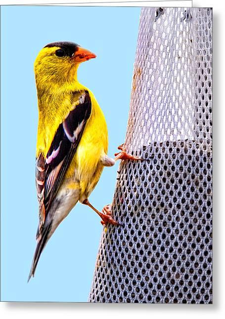 Yellow Finch Greeting Card by Joe Granita