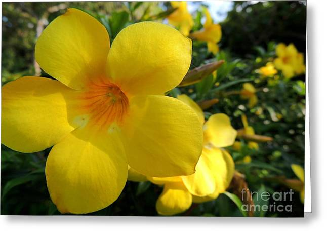 Greeting Card featuring the photograph Yellow Flower by Kristine Merc