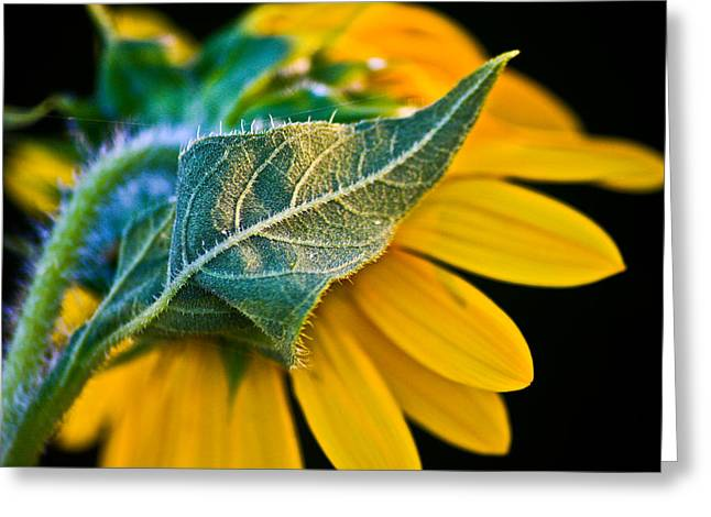 Yellow Flower Greeting Card by Mark Alder