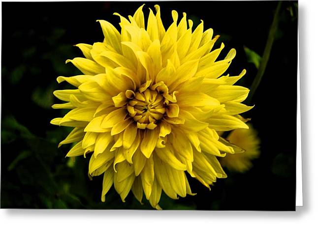 Yellow Flower Greeting Card by Matt Harang