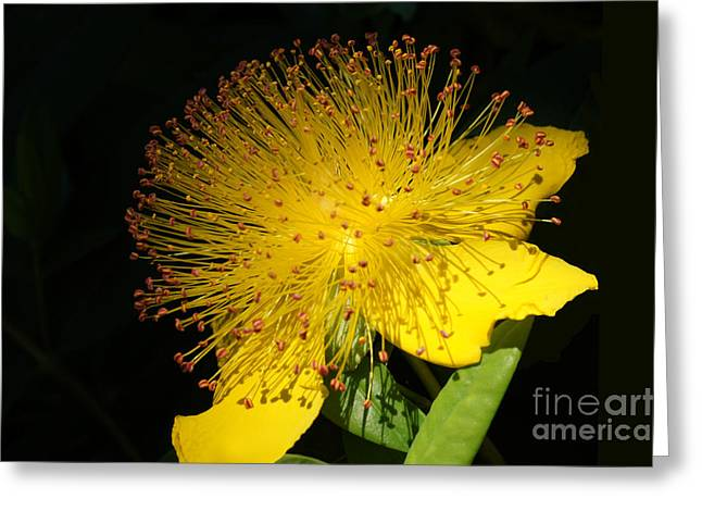 Yellow Flower Greeting Card by Nur Roy