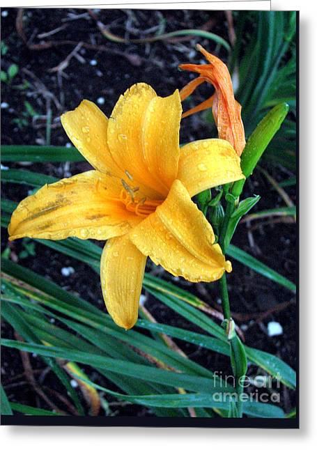 Yellow Flower Greeting Card by Sergey Lukashin