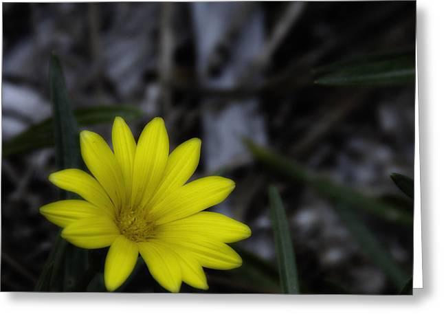 Yellow Flower Soft Focus Greeting Card