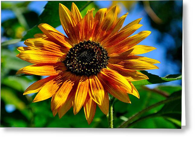 Yellow Flower Greeting Card by Todd Hostetter