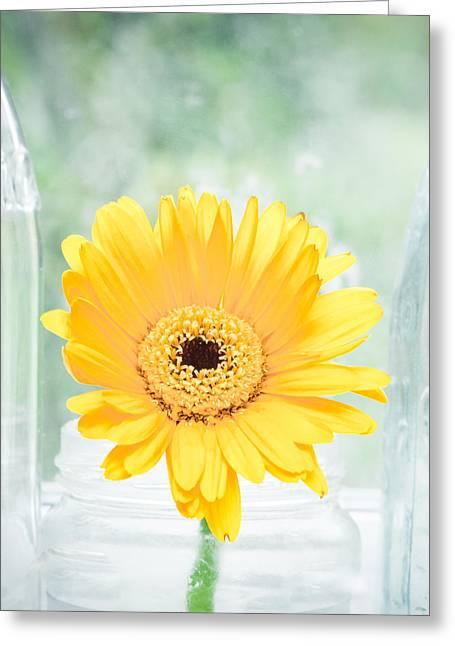 Yellow Flower Greeting Card by Tom Gowanlock