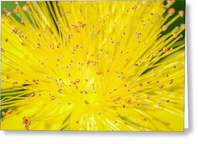 Greeting Card featuring the photograph Yellow Flower  by Trace Kittrell