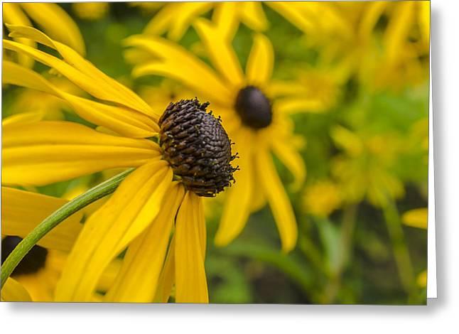 Yellow Flowers Greeting Card by Adam Budziarek