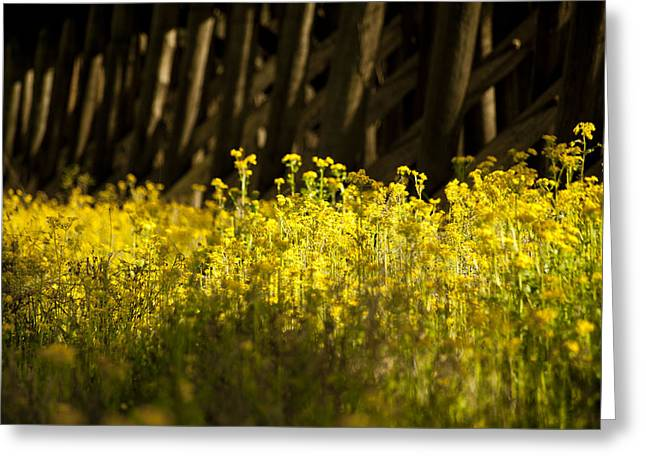 Yellow Flowers  Greeting Card by Alicia Morales