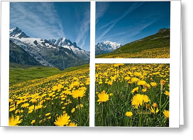 Yellow Flowers And Mountains Greeting Card by Garland Johnson