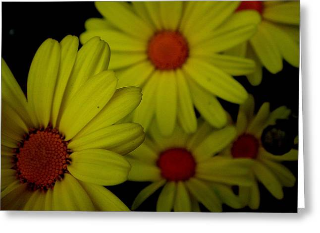 Yellow Flowers Greeting Card by Andrea Galiffi