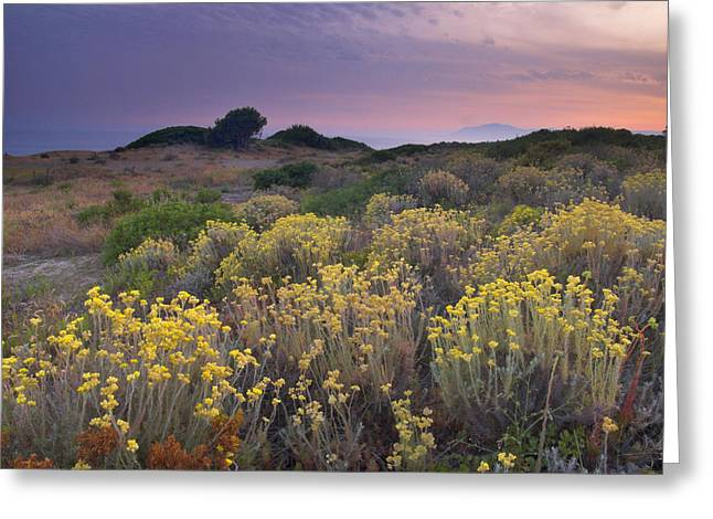 Yellow Flowers At Sunset Greeting Card by Guido Montanes Castillo