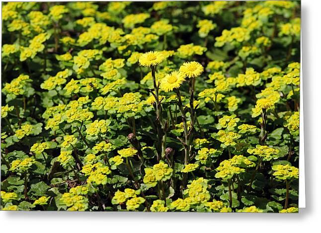 Yellow Flowers Carpet Greeting Card