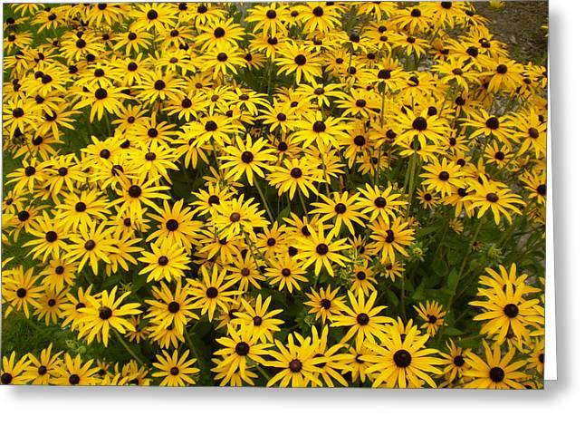 Yellow Flowers Greeting Card by Fabian Cardon