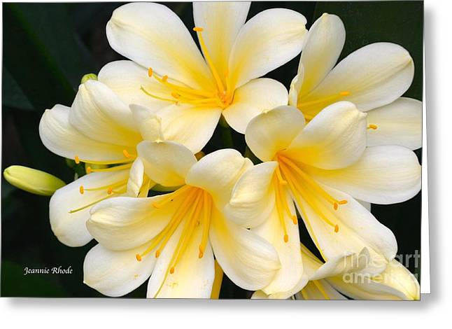 Greeting Card featuring the photograph Clivia Yellow Flowers by Jeannie Rhode