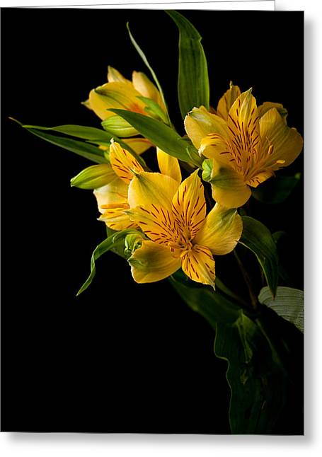 Greeting Card featuring the photograph Yellow Flowers by Sennie Pierson