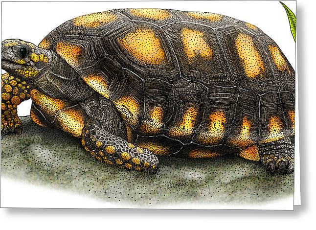 Yellow-footed Tortoise Greeting Card