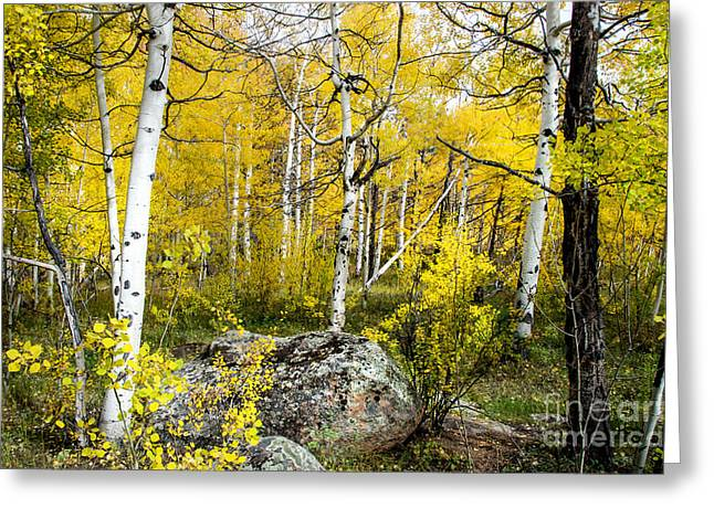 Yellow Forest Greeting Card by Baywest Imaging