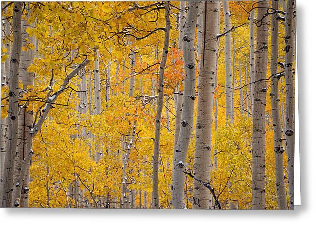 Yellow Forest Greeting Card by Leland D Howard