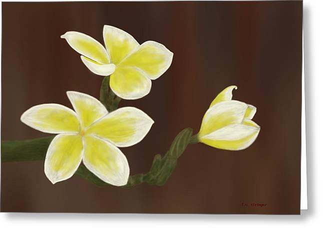Yellow Frangipani Greeting Card by Tim Stringer