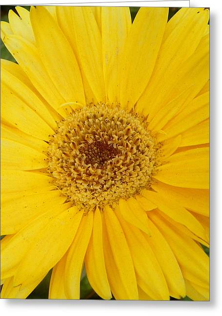 Yellow Fusion Greeting Card by Sheri McLeroy