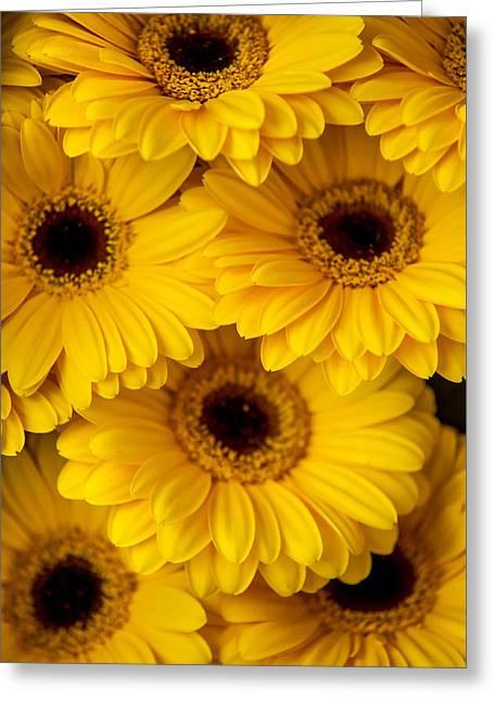 Yellow Gerbera 1. Amsterdam Flower Market Greeting Card by Jenny Rainbow