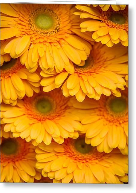 Yellow Gerbera 2. Amsterdam Flower Market Greeting Card by Jenny Rainbow