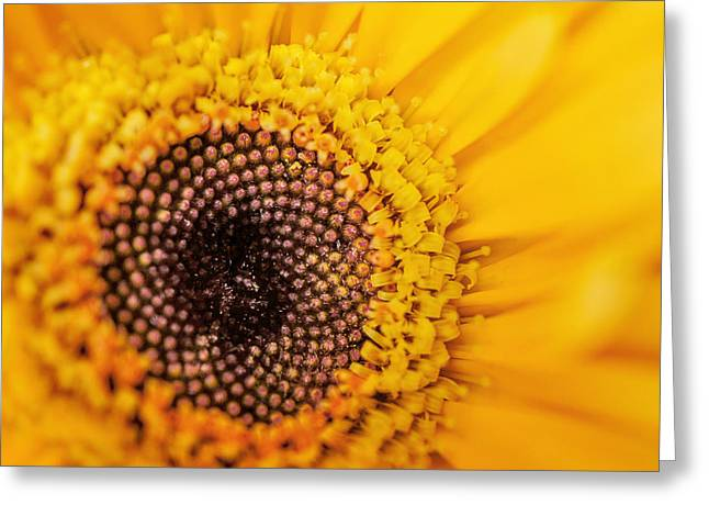 Greeting Card featuring the photograph Yellow Gerbera Squared by TK Goforth