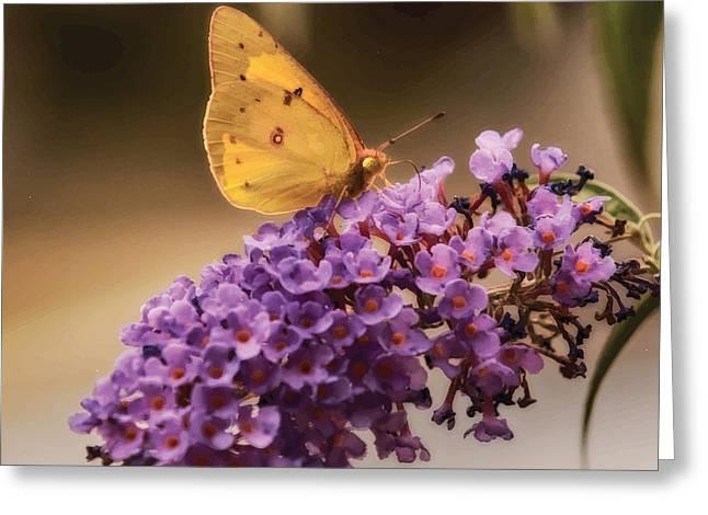 Yellow Gold Greeting Card by Melinda Dreyer
