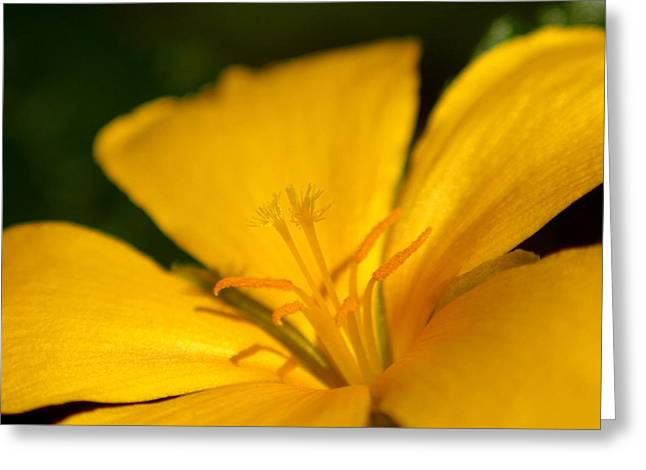 Greeting Card featuring the photograph Yellow by Greg Allore