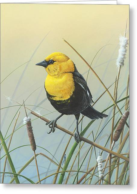 Yellow-headed Black Bird Greeting Card